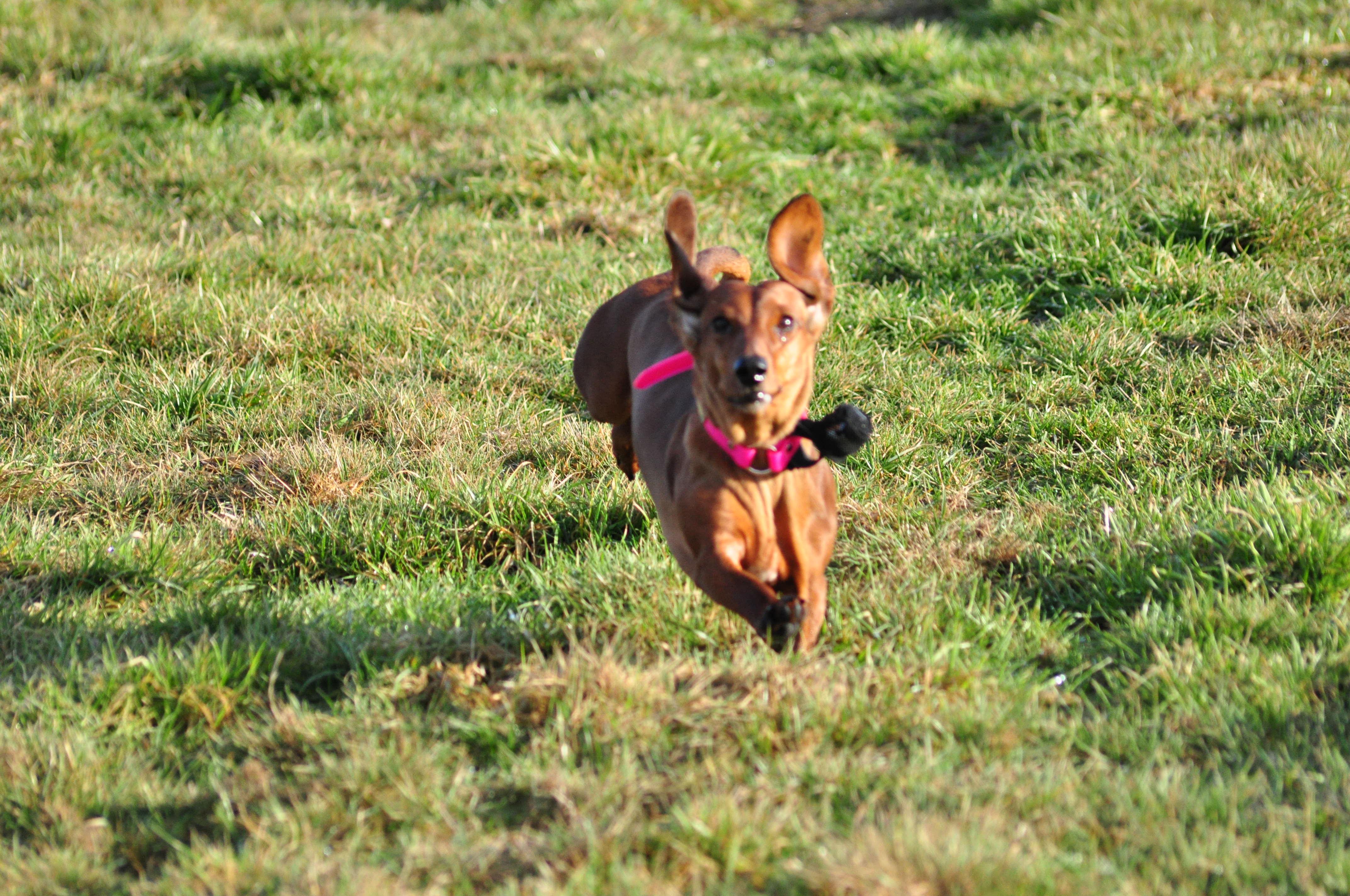 Chili-Dog-Flying