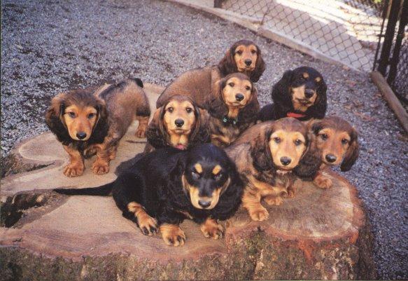 Puppies-on-the-stump