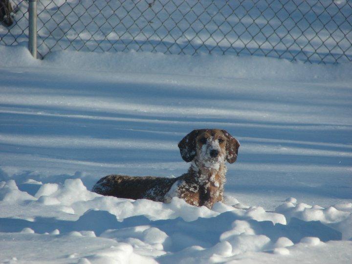 Prairie Dog Canine Rescue